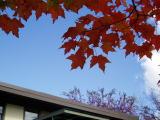 autumn_color